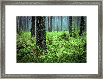 Solstice Glow  Framed Print by Mary Amerman