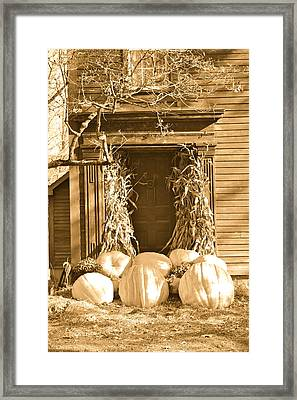 Some Big Pumpkins Framed Print by Robin Regan