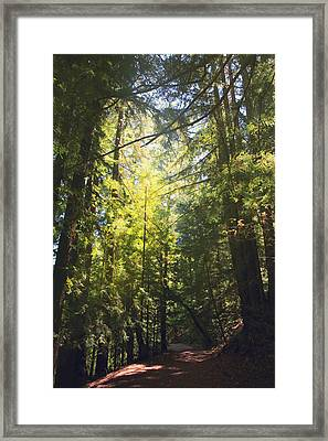 Some Days Really Shine Framed Print by Laurie Search