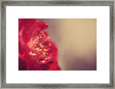 Some Light Into Your Darkness Framed Print by Laurie Search