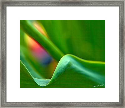 Some Like It Hot Framed Print by Theresa Tahara