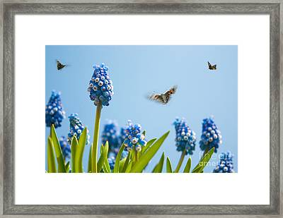 Something In The Air Framed Print by John Edwards