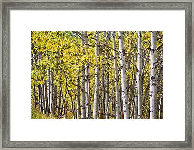 Somewhere Along The Road Framed Print by James BO  Insogna