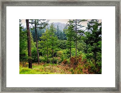 Somewhere In The Forest Over Upper Lake. Glendalough. Ireland Framed Print by Jenny Rainbow
