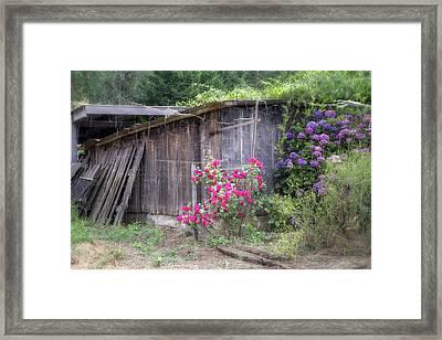 Somewhere Near Geyserville Ca Framed Print by Joan Carroll