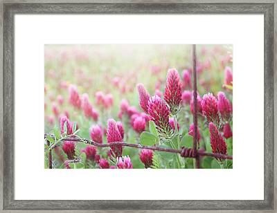 Somewhere Only We Know Framed Print by Amy Tyler