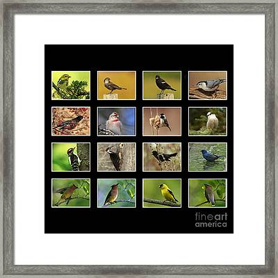 Song Birds Of Canada Collection Framed Print by Inspired Nature Photography Fine Art Photography