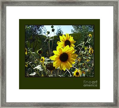 Song Of The Sunflower Framed Print by Jacquelyn Roberts
