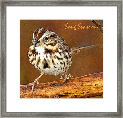 Framed Print featuring the photograph Song Sparrow On Tree Branch by A Gurmankin