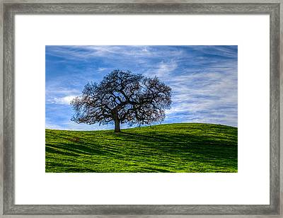 Sonoma Tree Framed Print by Chris Austin