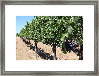 Sonoma Vineyards In The Sonoma California Wine Country 5d24491 Framed Print by Wingsdomain Art and Photography