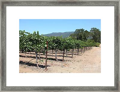 Sonoma Vineyards In The Sonoma California Wine Country 5d24492 Framed Print by Wingsdomain Art and Photography