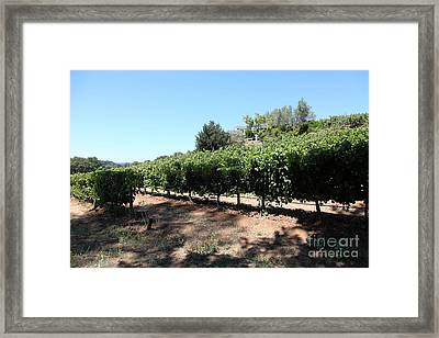 Sonoma Vineyards In The Sonoma California Wine Country 5d24499 Framed Print by Wingsdomain Art and Photography