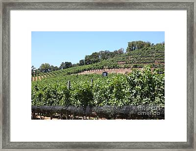 Sonoma Vineyards In The Sonoma California Wine Country 5d24503 Framed Print by Wingsdomain Art and Photography