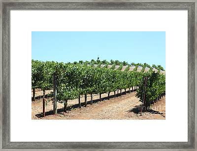 Sonoma Vineyards In The Sonoma California Wine Country 5d24506 Framed Print by Wingsdomain Art and Photography