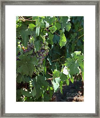 Sonoma Vineyards In The Sonoma California Wine Country 5d24510 Vertical Framed Print by Wingsdomain Art and Photography
