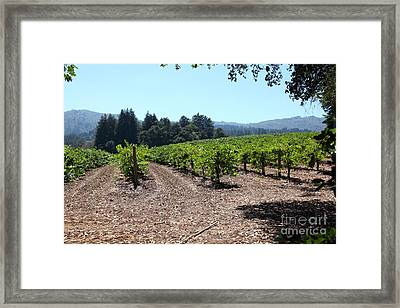 Sonoma Vineyards In The Sonoma California Wine Country 5d24511 Framed Print by Wingsdomain Art and Photography