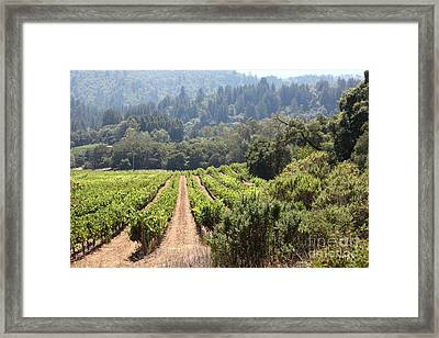 Sonoma Vineyards In The Sonoma California Wine Country 5d24518 Framed Print by Wingsdomain Art and Photography