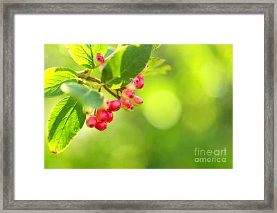 Soon Framed Print by Beve Brown-Clark Photography