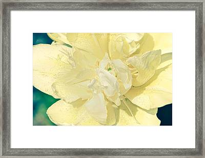 Soothing Daffodils Framed Print by Sonali Gangane