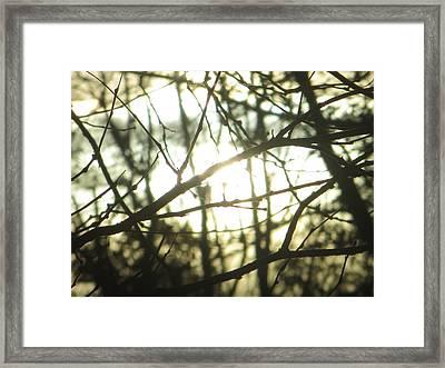Soothing Force Framed Print by Sonali Gangane