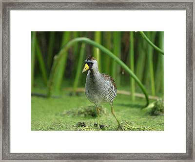 Sora Motion Portrait Framed Print by James Peterson