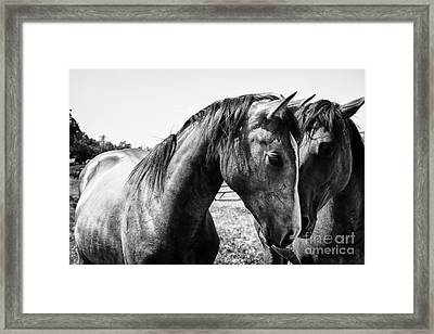 Soul Mates Framed Print by Toni Hopper