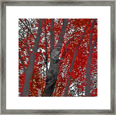 Soul Of The Trees Framed Print by Renata Vogl