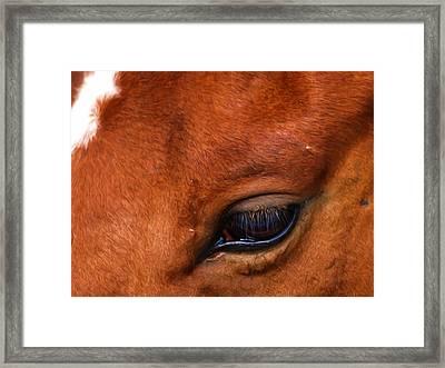 Soulful Framed Print by Tom Druin