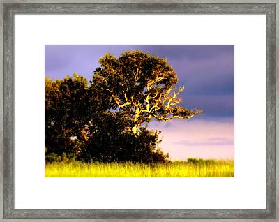 Sounds Of Topsail Framed Print by Karen Wiles
