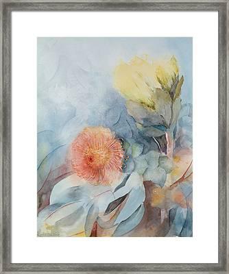 South Africa Protea Framed Print by Karen Armitage