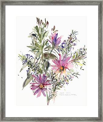 South African Daisies And Lavander Framed Print by Claudia Hutchins-Puechavy