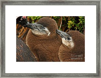 Southafrica Youngsters Framed Print by Meleah Fotografie