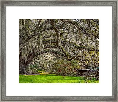 Southern Charm Framed Print by Steve DuPree
