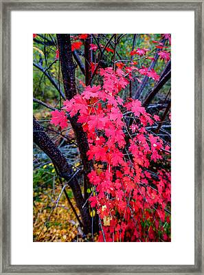 Southern Fall Framed Print by Chad Dutson