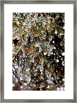 Southern Ice Tree Framed Print by Lisa Wooten