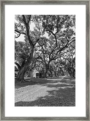 Southern Lane Monochrome Framed Print by Steve Harrington