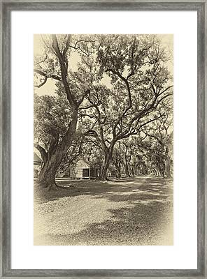 Southern Lane Sepia Framed Print by Steve Harrington