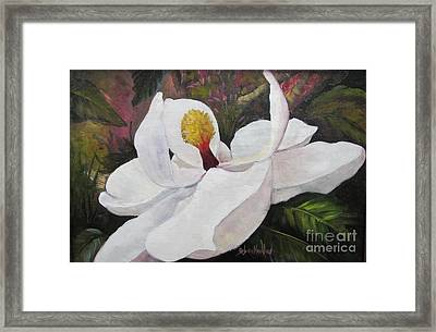 Southern Magnolia Framed Print by Barbara Haviland