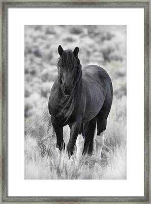 Sox D8749 Framed Print by Wes and Dotty Weber