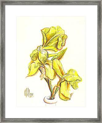 Spanish Irises Framed Print by Kip DeVore