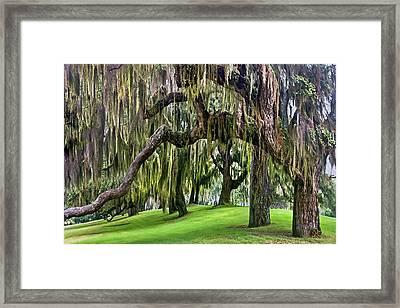 Spanish Moss Framed Print by Debra and Dave Vanderlaan