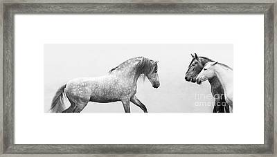 Spanish Stallion Approches The Mares Framed Print by Carol Walker