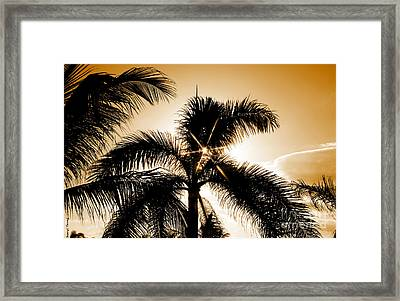 Sparkle Through The Palms Framed Print by Cheryl Young
