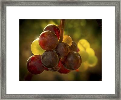 Sparkling Grape Cluster Framed Print by Jean Noren