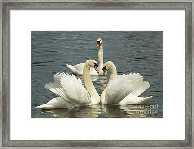 Special Kinda Love Framed Print by Andrea Kollo