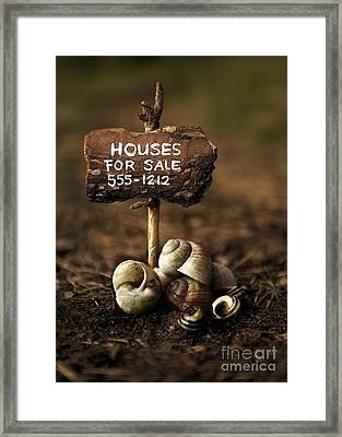 Special Offer Framed Print by Jaroslaw Blaminsky