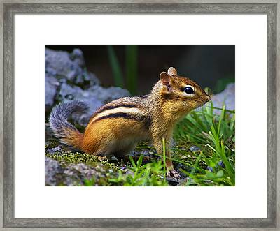 Speedy Framed Print by Bill Caldwell -        ABeautifulSky Photography