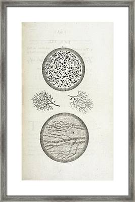 Sperm And Blood Microscopy Framed Print by British Library