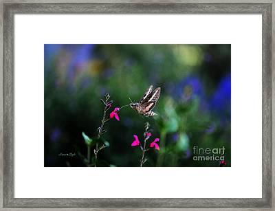 Sphinx Moth And Summer Flowers Framed Print by Karen Slagle